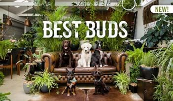 Best Buds | Plant Package