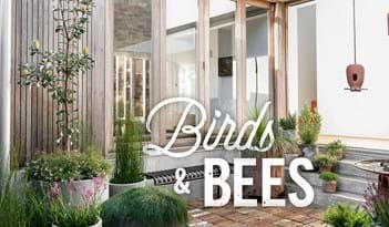 Birds & Bees | Plant Package