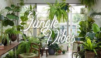 Jungle Vibes | Plant Package